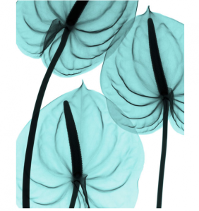 https://partyhaireverywhere.files.wordpress.com/2011/03/x-rays-of-flowers-by-hugh-turvey-5-580x615.png?w=282